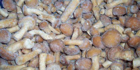 Замороженные грибы на зиму